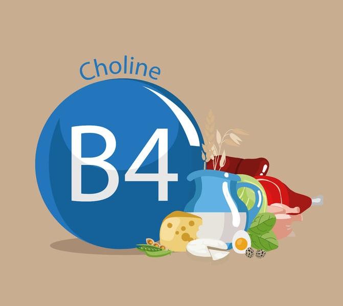 Suplementacja choliną (witaminą B4)
