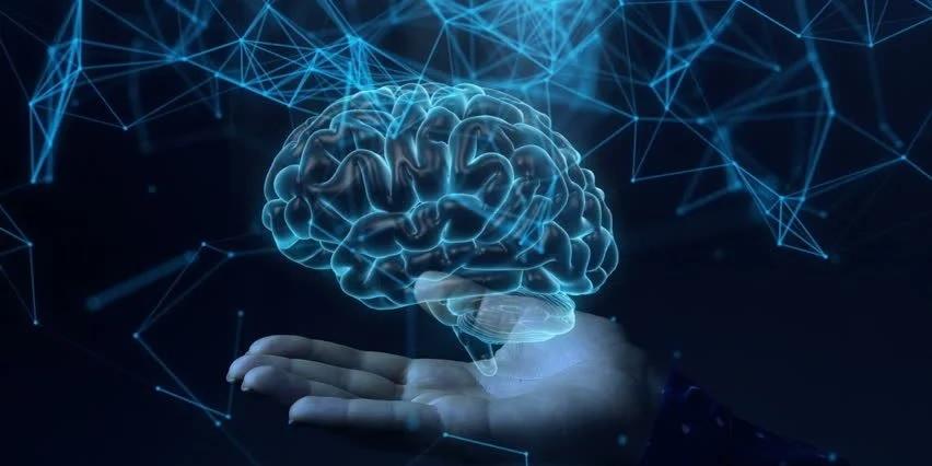 Brawn Nootropix - działanie, najlepszy środek na mózg